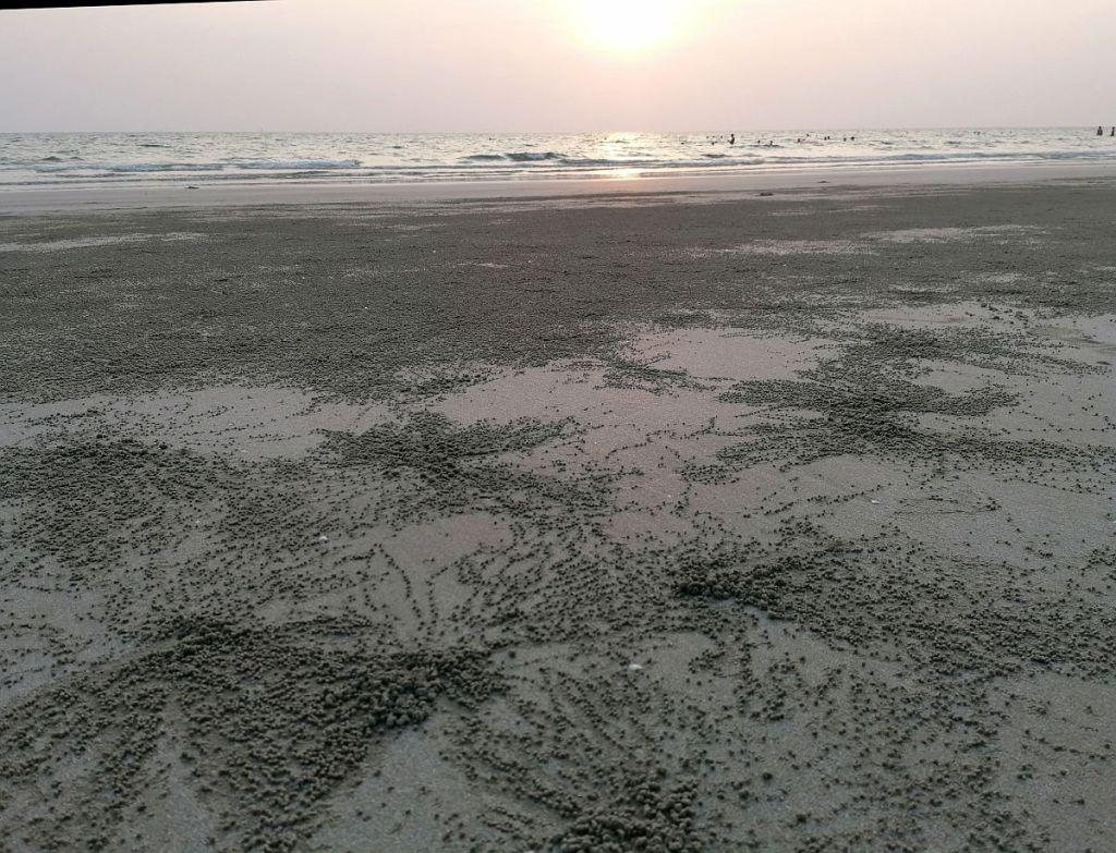 kugelkrebse am Strand