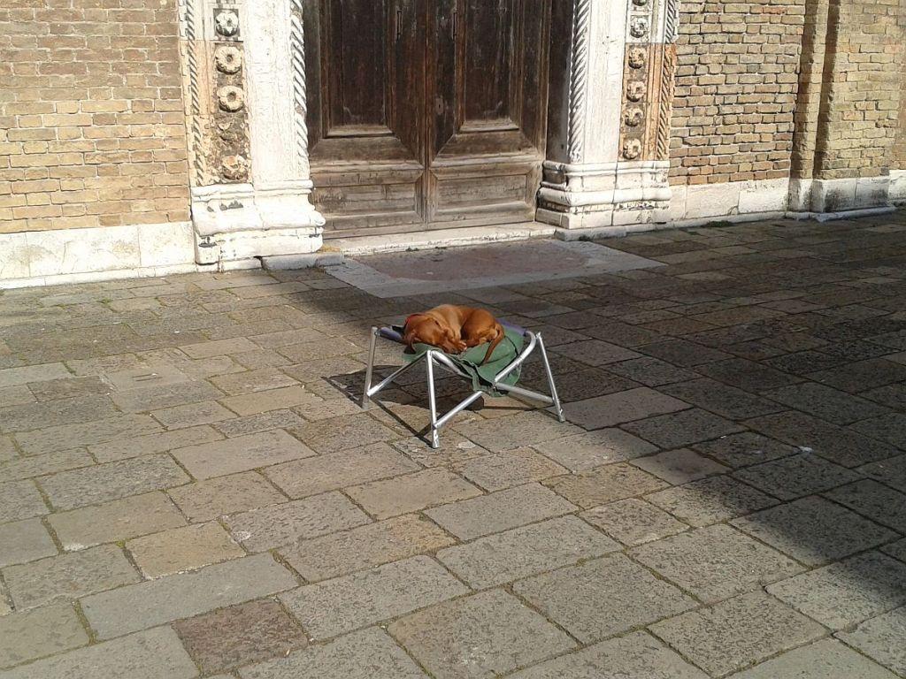 Hund entspannt sich auf Stuhl