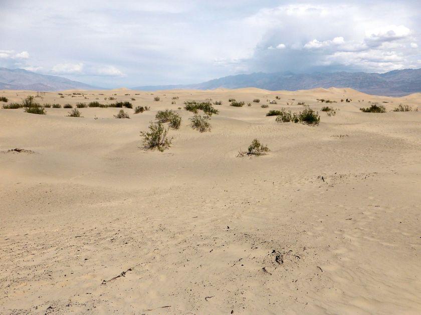 Wüste bei Las Vegas
