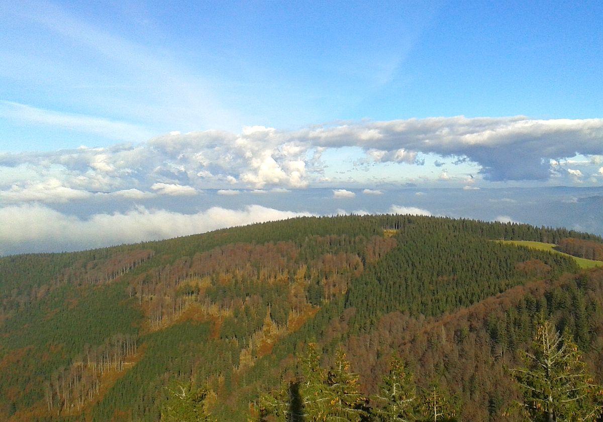 Schwarzwald – ohneRückfahrtticket