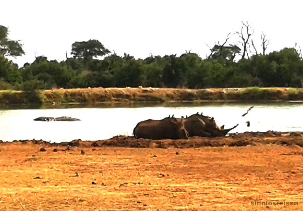 Wasserloch mit Nashörnern und Nilpferden