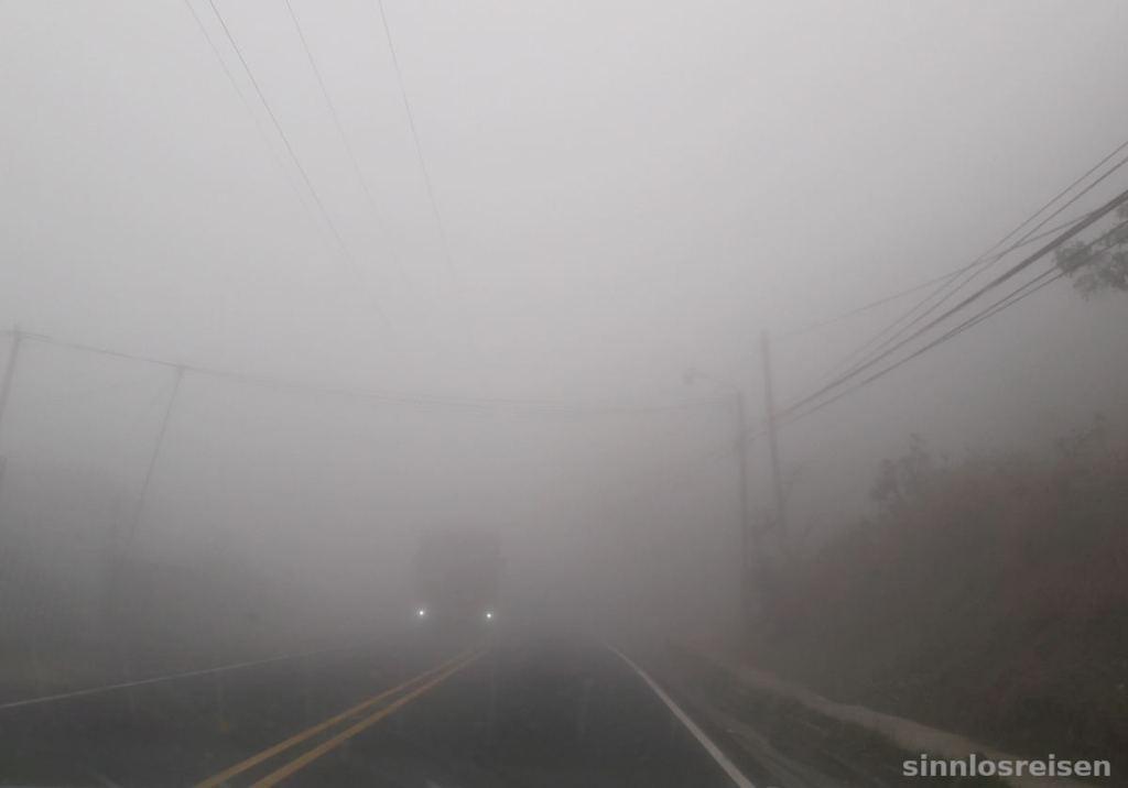 Nebel auf der Straße im Nebenwald