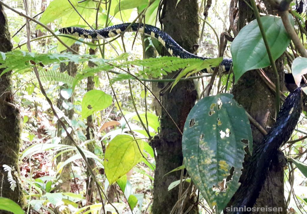 Snake in rain forest