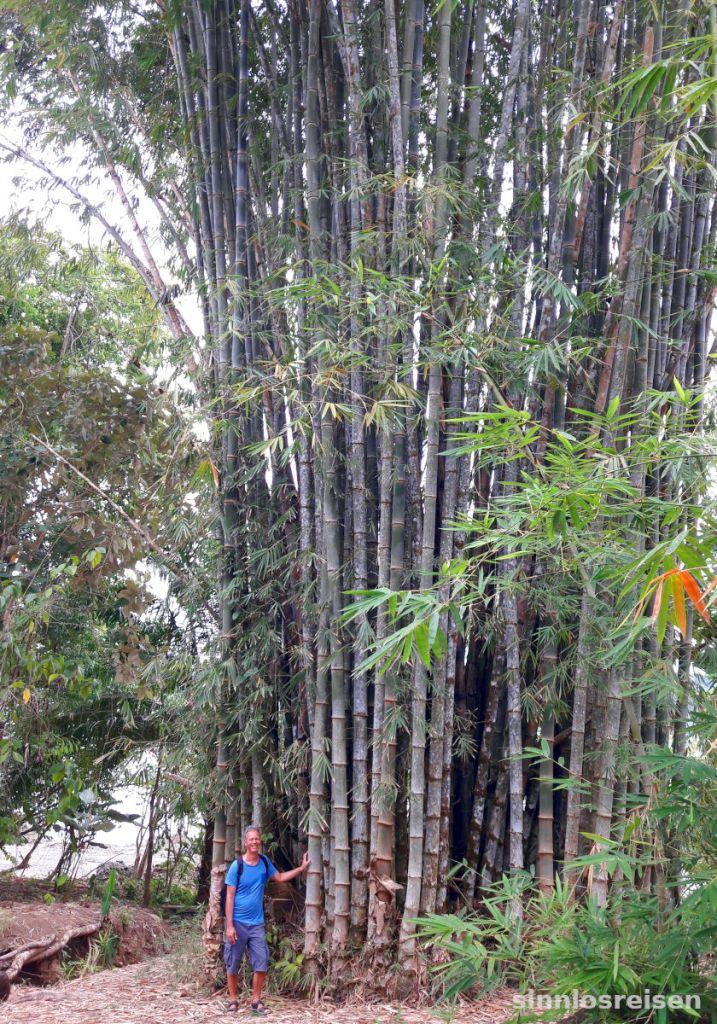 Großer Bambus, kleiner Mann